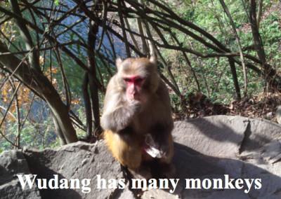 Wudang Monkeys