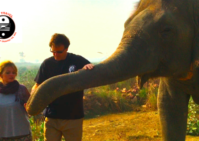 Terry Hodgkinson helping elephants in India